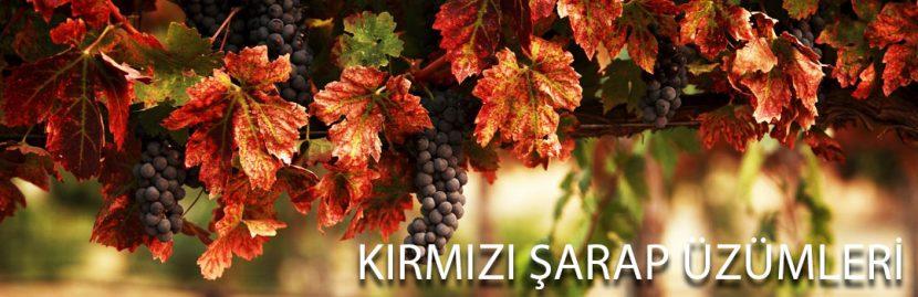 Kırmızı Şarap Üzüm Çeşitleri